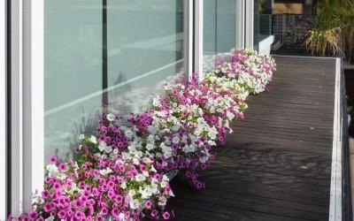 Цветочная оранжерея